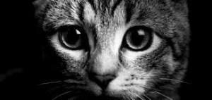 Le statut juridique des animaux: Compte-rendu de la Table-ronde annuelle du Master 2 Droit Privé Général de Rennes 1