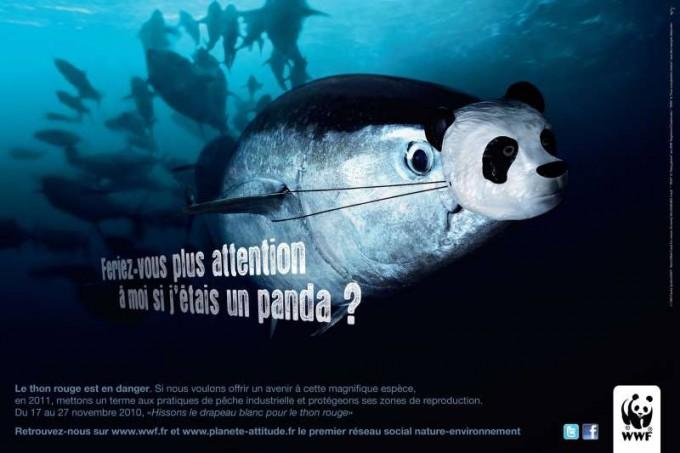 thon-rouge-panda-680x453
