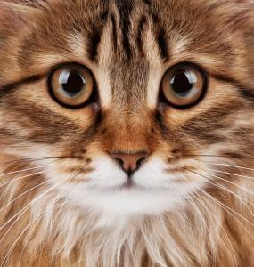 Le Code civil intègre la « sensibilité » des animaux