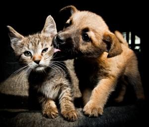Le nouveau statut juridique de l'animal : une idée audacieuse pour une réforme ineffective