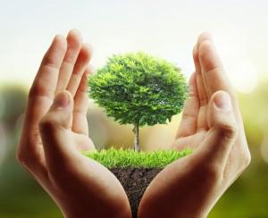 Le préjudice écologique, une action en responsabilité reconnue explicitement dans le Code civil