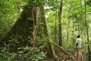 Le droit coutumier africain garant de la sauvegarde des forêts