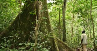 Rainforest_Gabon