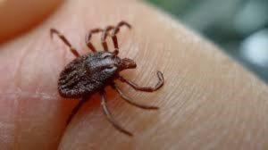Maladie de Lyme : une nouvelle plainte, contre X