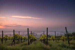 La Chine et le vin : quelles démarches pour la valorisation qualitative de son vignoble ?